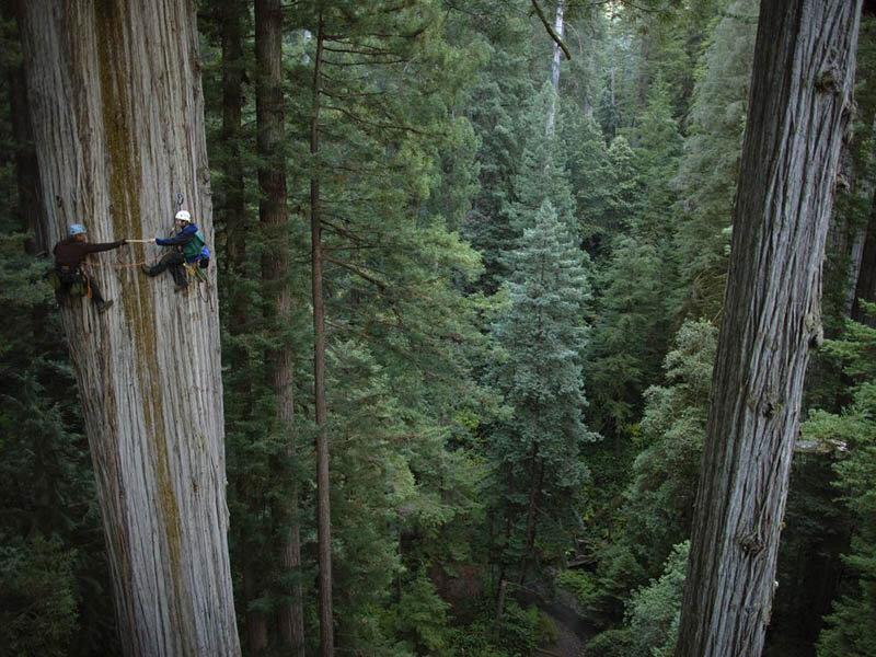 Супердеревья в национальном парке Редвудс, штат Калифорния, поражают воображения