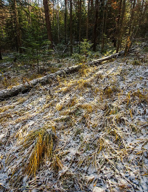 Тени в лесу