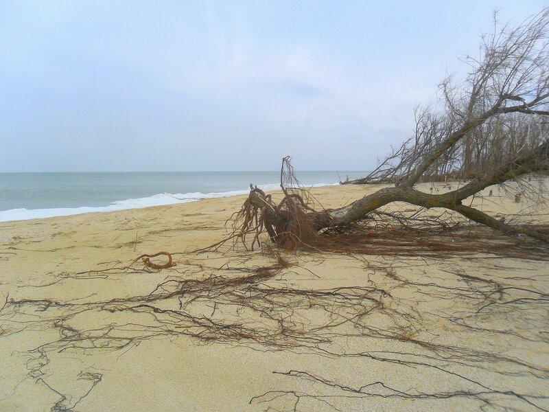 На берегу ... SAM_5610.JPG