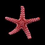 SD NV STARFISH 3.png