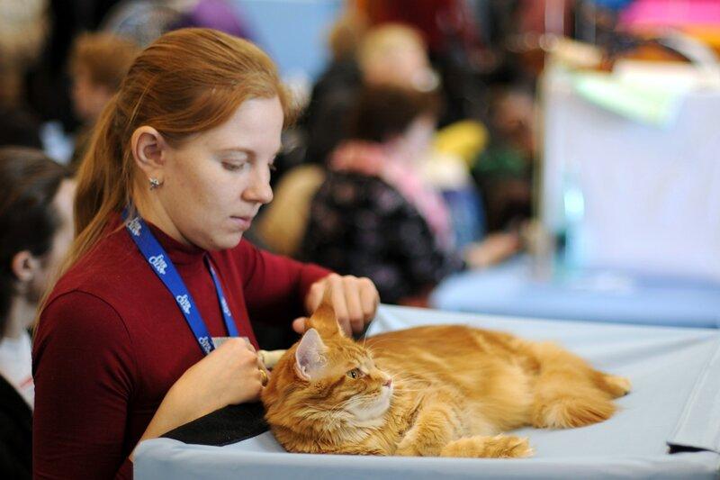Международная выставка кошек «Кэтсбург 2011»