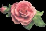 rosenrosa022.png