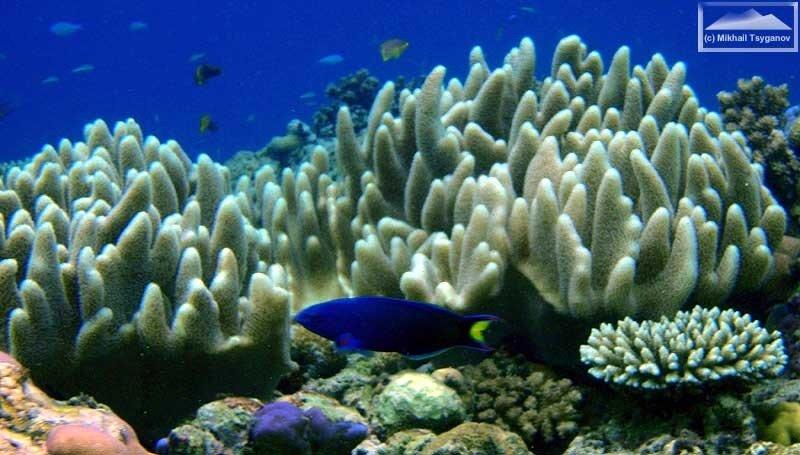 Кораллы у Биака