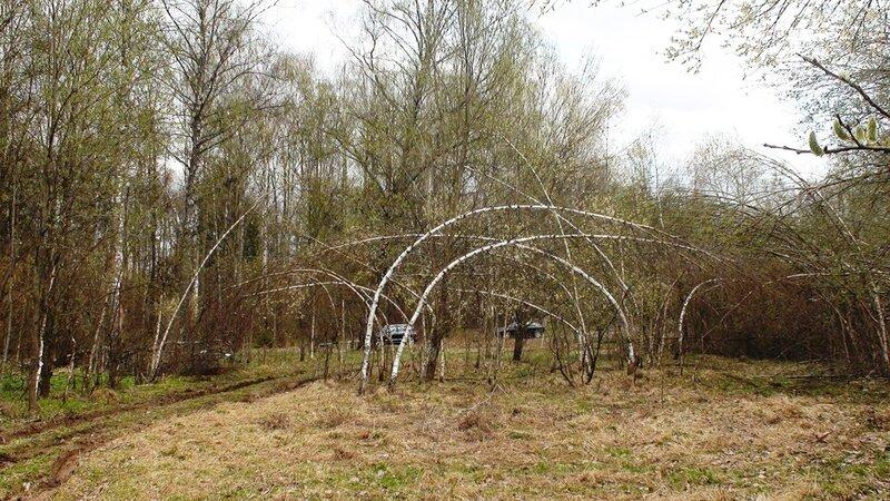 Поваленные ледяным дождём деревья. Первомайская встреча жителей Новорижского