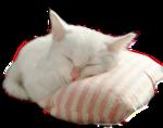 Кошки 5 0_57c54_10609d92_S