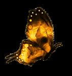 «DBV Gold Rush» 0_58b48_a94e5de5_S