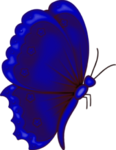 бабочки 0_58f02_c1c20de6_S