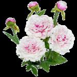 «Скрап -набор Мой сад» 0_5e148_c28ea171_S