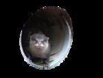 Животные 5 0_5f07b_417e3ecd_S