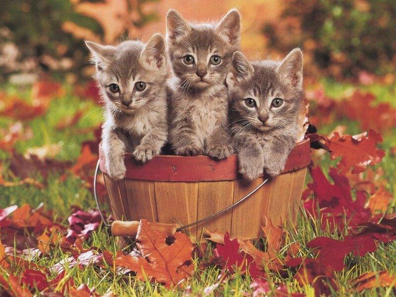 Кошки  0_5292e_ab5e32be_XL