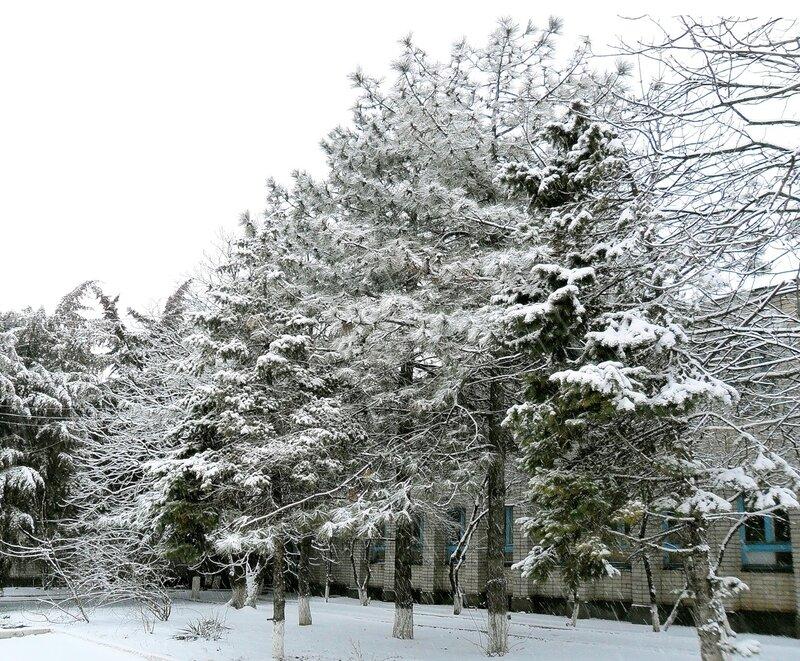 Весна идёт и снег идёт