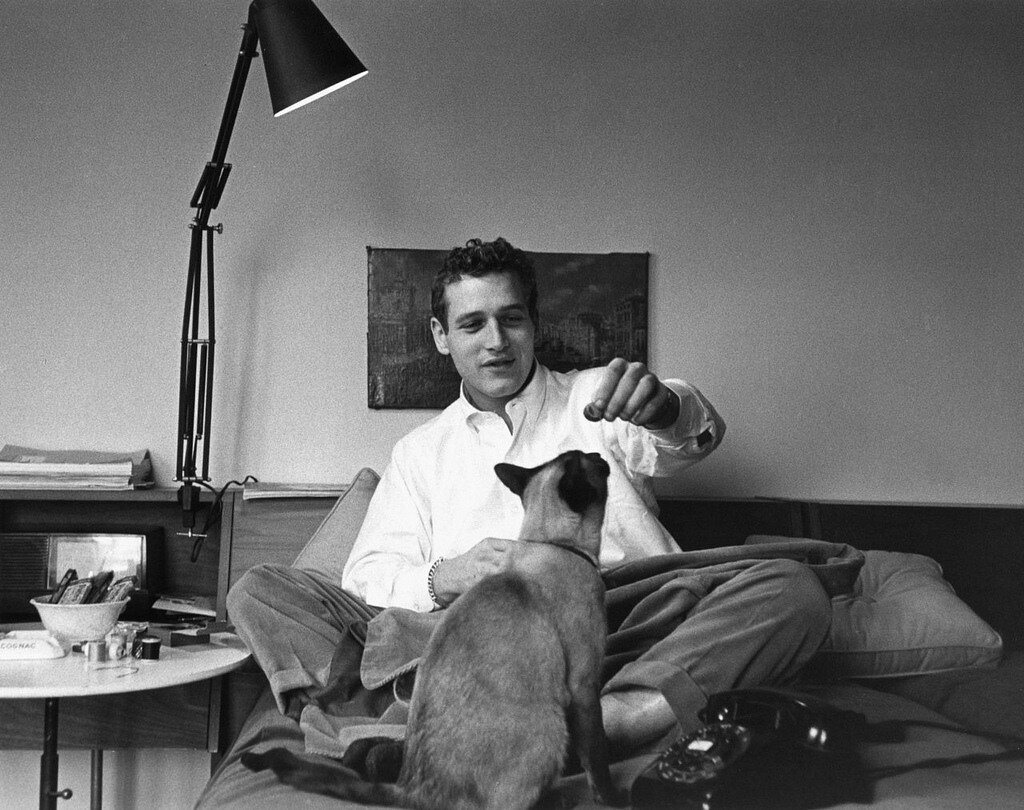 Paul Newman with Louis XIV, Sanford Roth's cat 1956