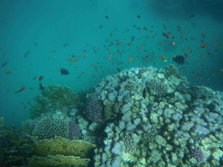 Стаи рыб в Красном Море