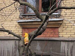 Диковинная птица в райском саду