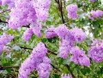 flower_0330