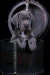 Собаки  0_57c8a_b3c64c77_S