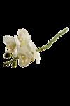 «Скрап -набор Мой сад» 0_5e0f5_b3652dee_S