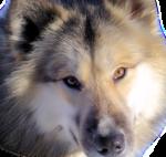 Лиса,волк  0_5091a_b36f34dc_S