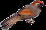 Птицы  разные  0_51c4f_cd9e80f_S