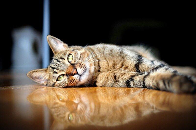 Кошки  0_5290b_5b78d134_XL