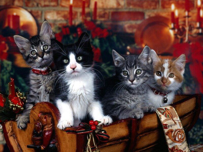 Кошки  0_52931_baa98b3a_XL
