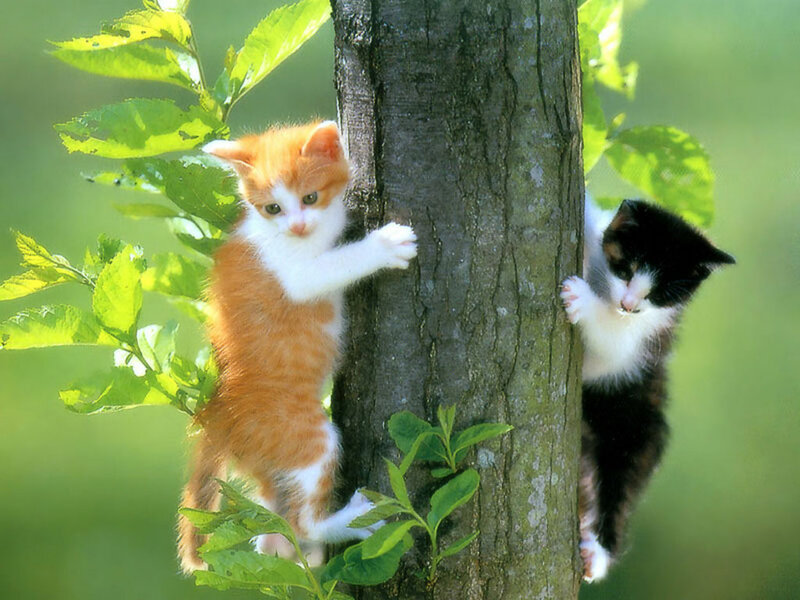 Кошки  0_52938_c948e01c_XL