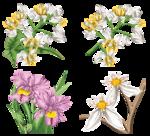 Орхидеи 45