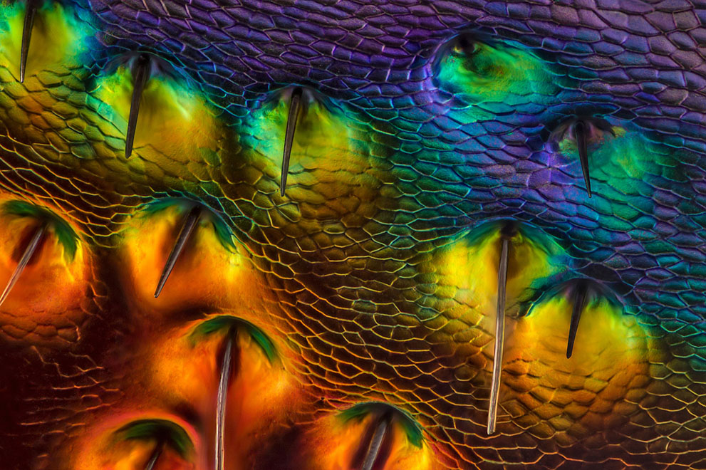 It's a small world, Photomicrography Competition1280.jpg
