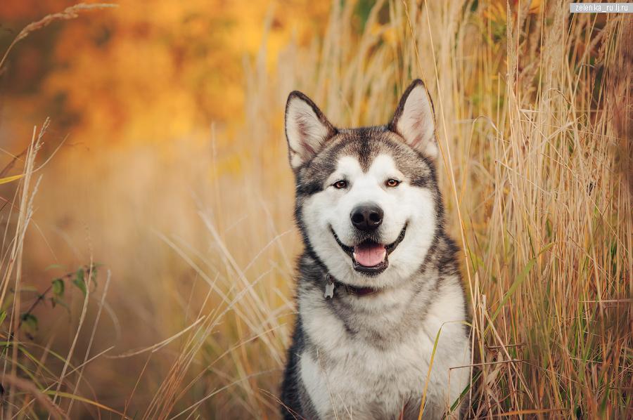 пофотографирую Ваших собак! - Страница 3 0_164062_7d65f1db_orig
