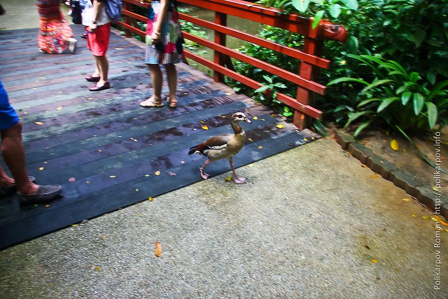 0 c4fbd 4df01cef orig Парк птиц Jurong в Сингапуре