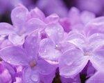 flower_0328