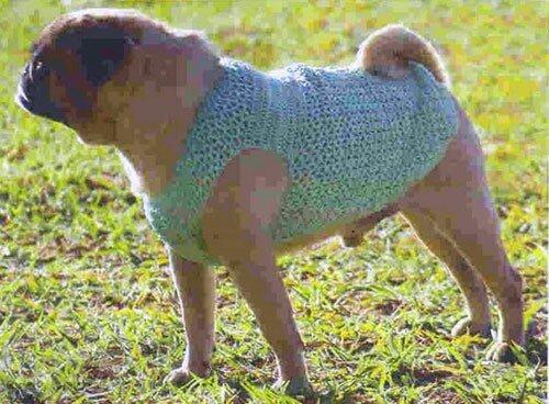 Одежда для животных: