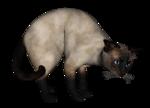 сиамские кошки (5).png