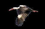 Птицы  разные  0_51c8f_428d8cc9_S