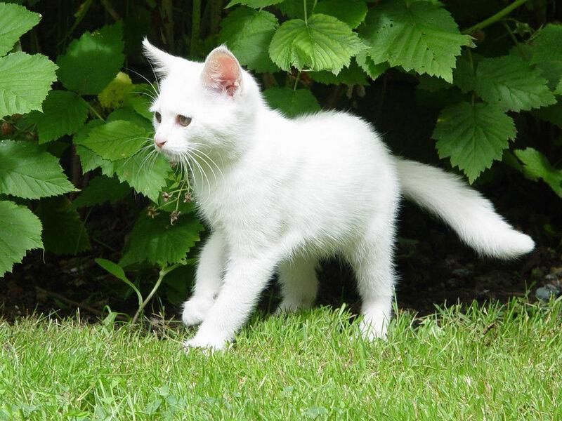 Кошки  0_52941_b9aeb83b_XL
