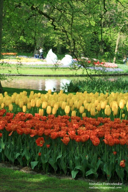 голландия, парк кёкенхоф