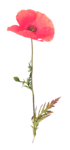 etd_add-on_summermeadow (20).png