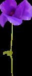 NLD Poppy (5).png