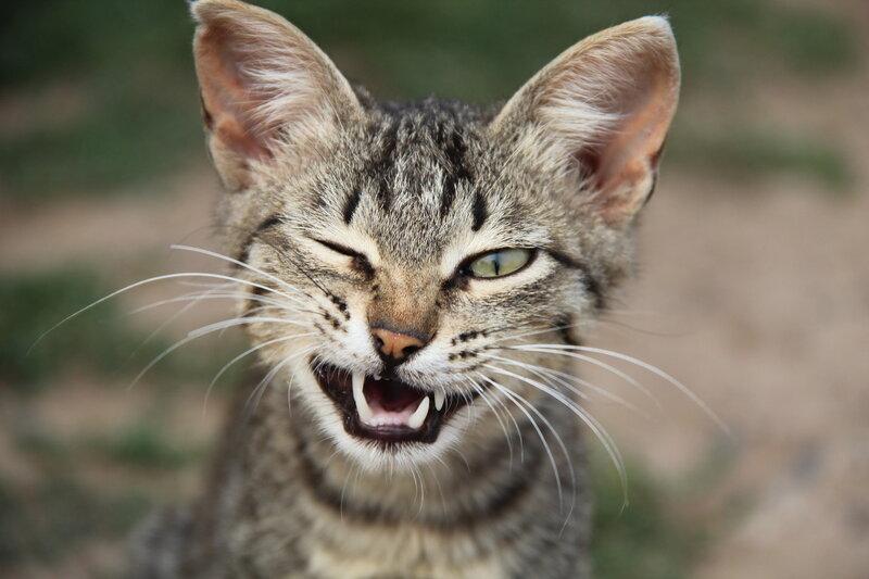 кошачьи фото 2592x1728 с домашняя кошка один суженный зрачок усики высокое разрешение черная шерсть зеленые глаза...