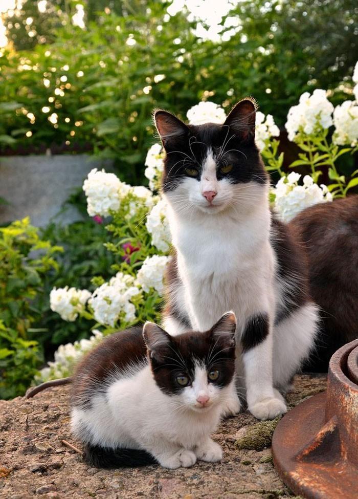 50 красавцев котов и их очаровательные мини-копии