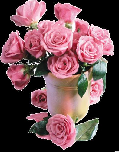 Клипарт розы на прозрачном фоне ...: arnusha.ru/post227724853