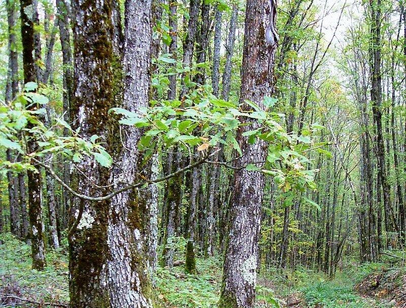 В лесу, под Горячим Ключом, в походе ... (159).JPG