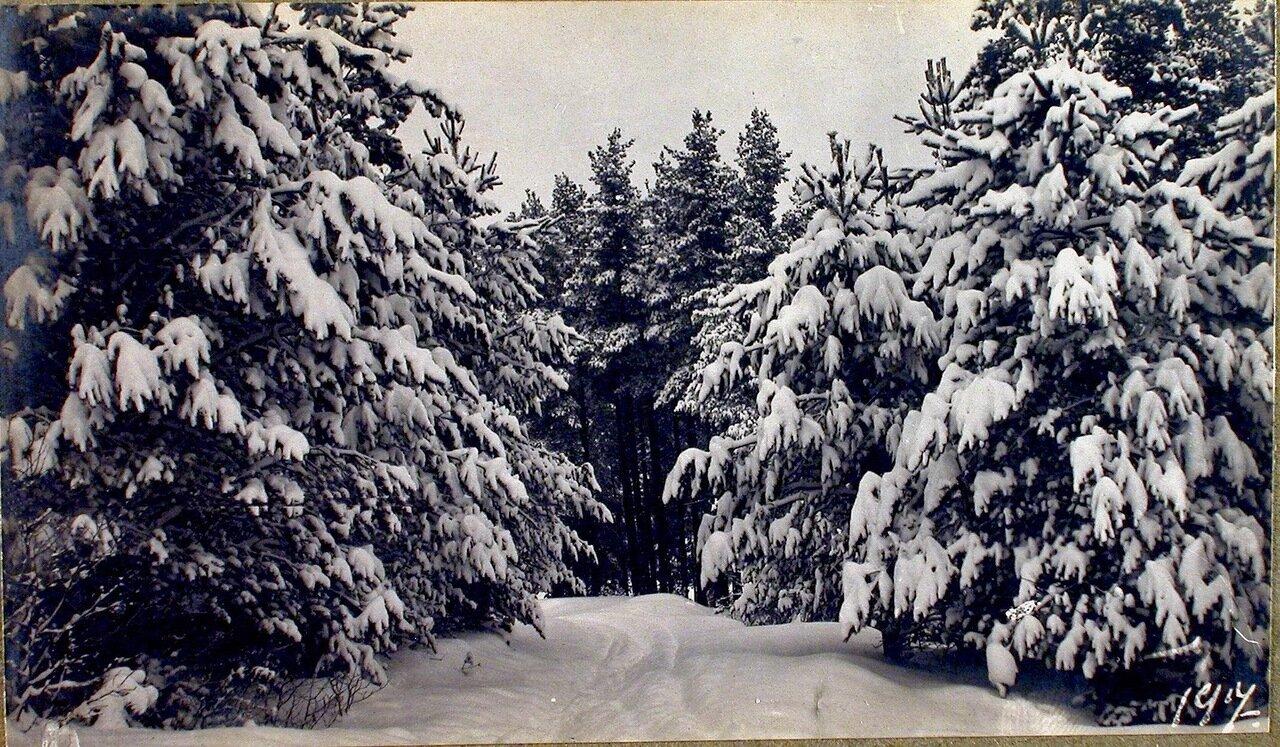 11. Уголок парка (зимний пейзаж)