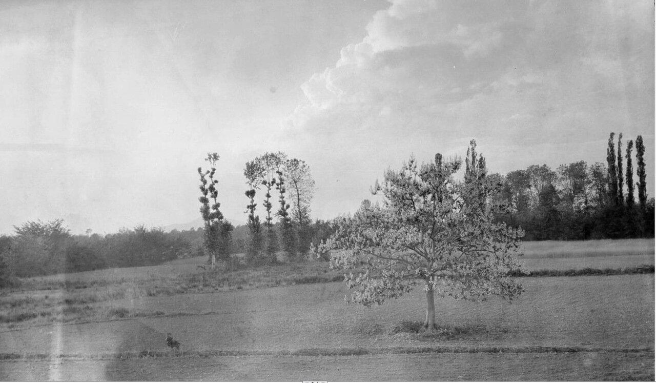 Зугдиди. Цветущее дерево в окрестностях города