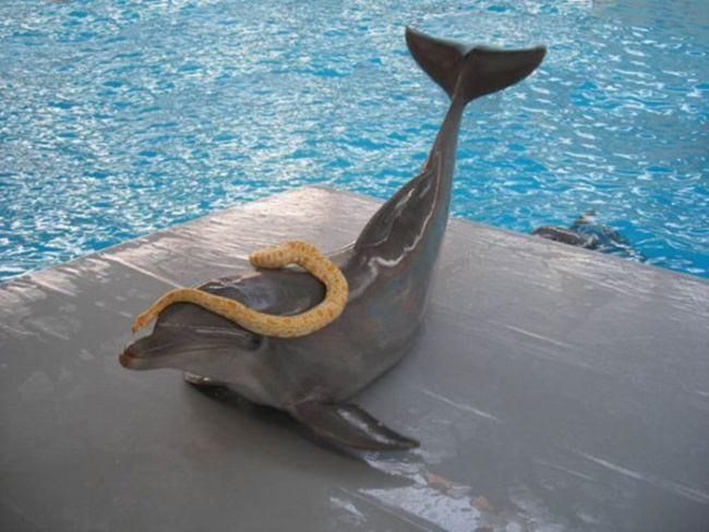 дельфин и змея