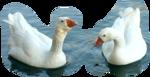 Птицы  разные  0_65dcd_5a7139df_S