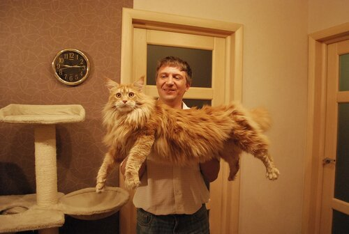 Сумка переноска для собак и кошек тоннель большая