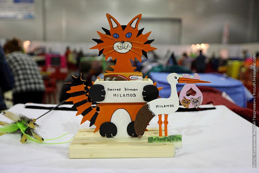 фото выставки кошек