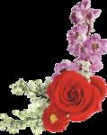 roza2 (58).png