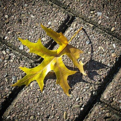 Осенняя прогулка по Тильбургу